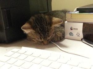 Still a desk kitteh